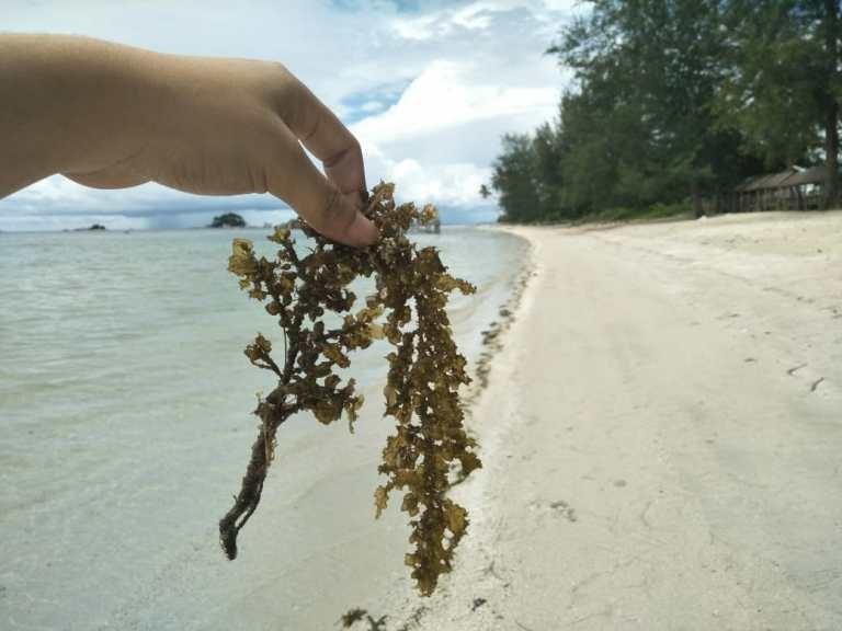 Inovasi Baru ! Pelatihan Pembuatan Bahan Bakar Dari Sampah Laut Oleh Dosen Teknik UMRAH